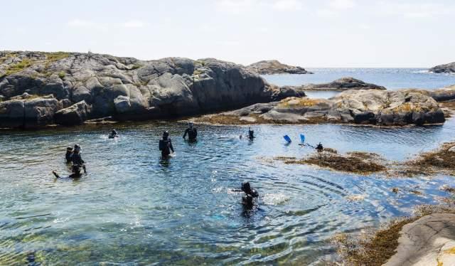 Snorkletur med Kote Null. Flatskjæra utenfor Gjeving