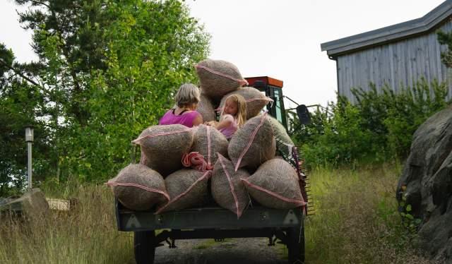 Sandøya er ei bilfri øy, men traktor til å frakte ting med må være lov