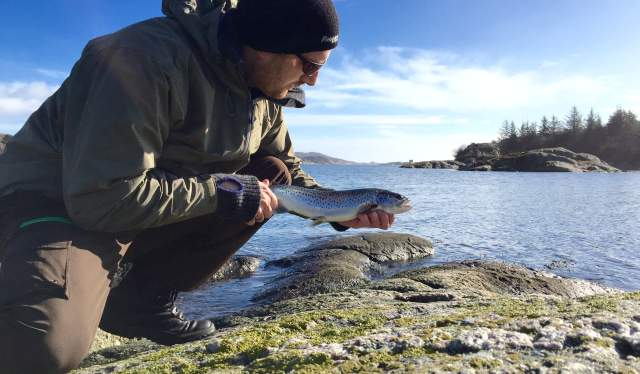 Winter sea trout from Skjernøya, Lindesnes