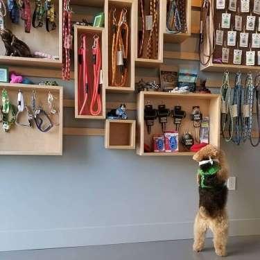 Oakland Grown Gift Guide: Kids & Pets