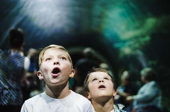 Kids at the Loveland Living Planet Aquarium