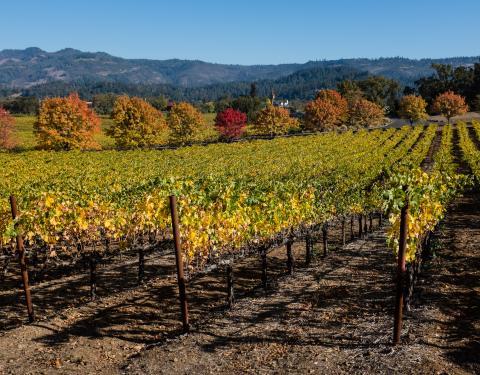 Sacramento Wine Guide Image