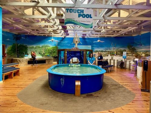 The inviting touch pool and aquariums at Marine Science Center