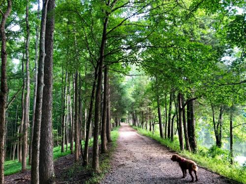 Greenway with Dog