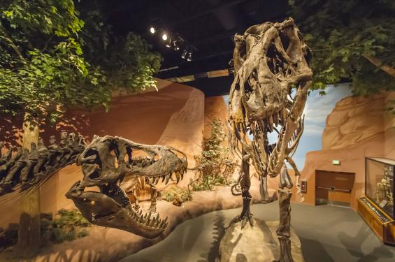 Dinosaur Skeletons at the Museum of Ancient Life