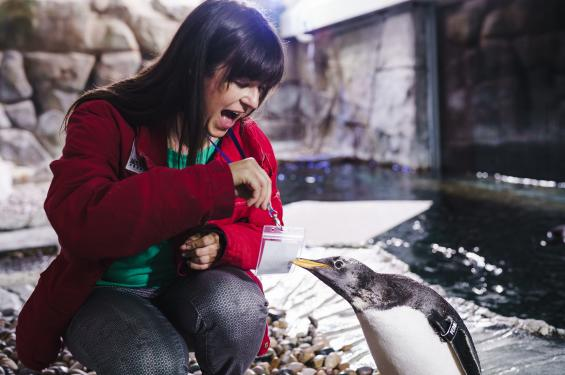 Feeding Penguins at the Loveland Living Planet Aquarium
