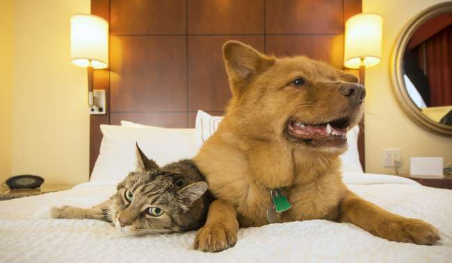 Dog and Cat Laying on a Hotel Bed