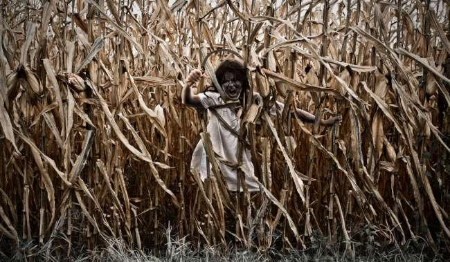 Halloween cornfield costume