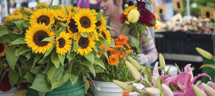 Des Moines Farmers Market Flower Vendor Sunflowers