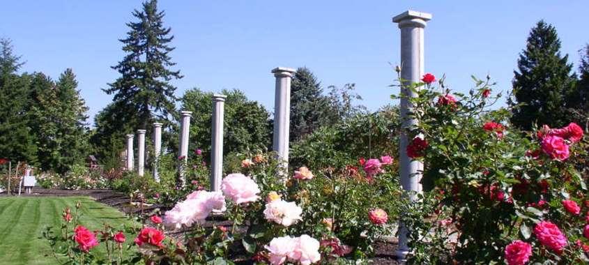 flowers in a garden under blue sky