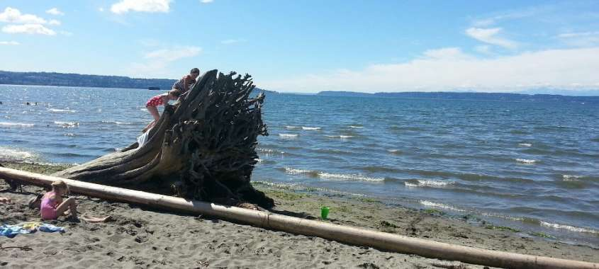 Des Moines Beach Driftwood