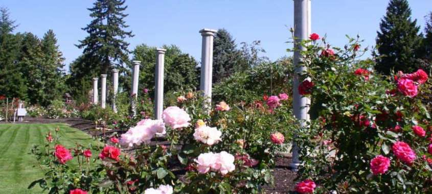 Flowers and pillars with blue sky in botanical garden
