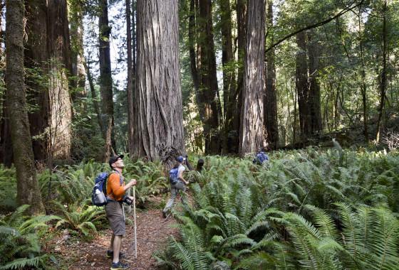 Tall Trees Grove