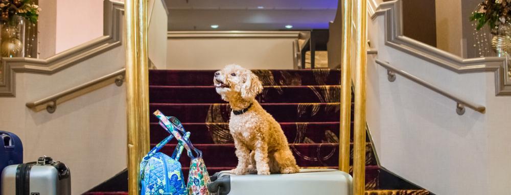 Dog checking into Hilton Downtown Fort Wayne