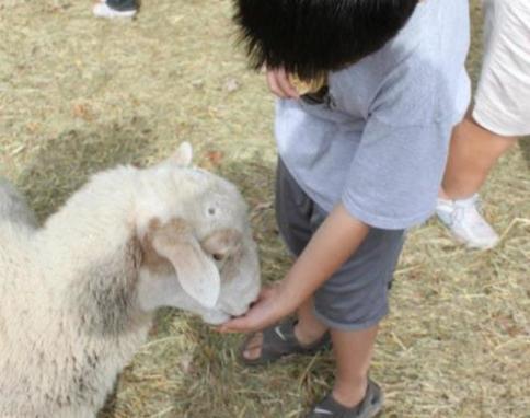 Wyandotte County Fair