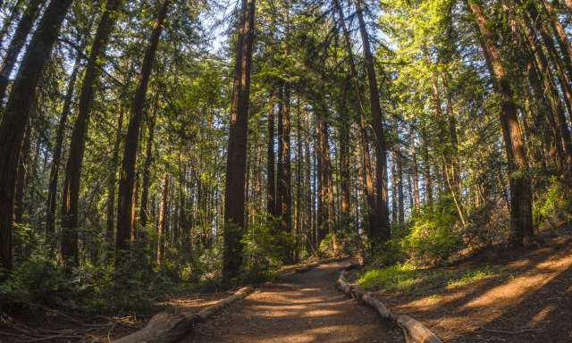A path between the trees of Joaquin Miller Park in Oakland, CA
