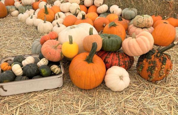 Wild pumpkin patch