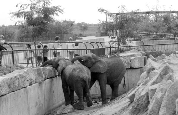 Sedgwick County Zoo Elephants Stephanie and Cinda