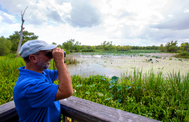 Looking for local wildlife at Brazos Bend State Park