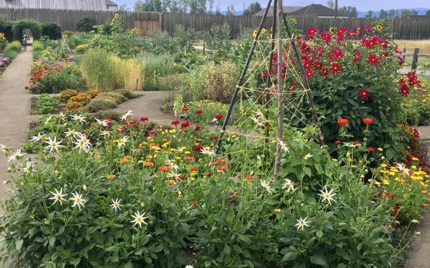 Fort Garden Summer