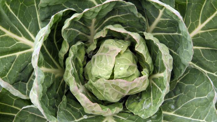 fresh produce north augusta sc