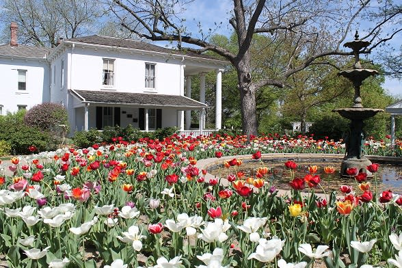 Tulip Time at Old Prairie Town