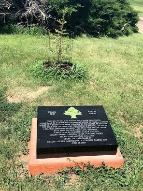 Lebanon Tree at Geographic Center