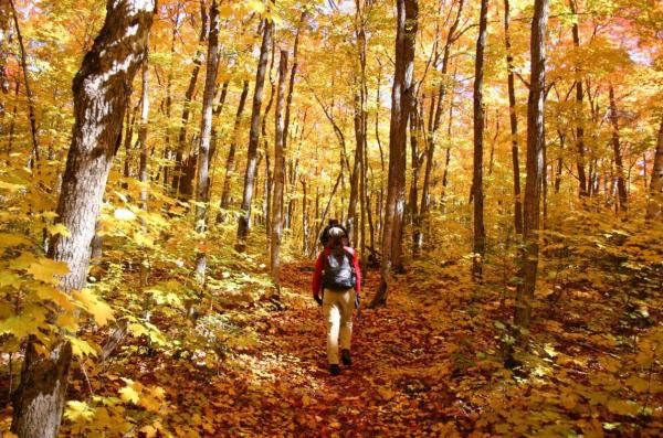 Fall hike in the wood with yellow leaves everywhere