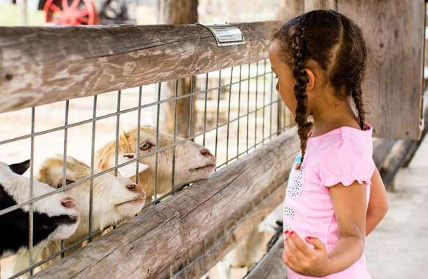 Child interacting with goats at Deanna Rose Children's Farmstead