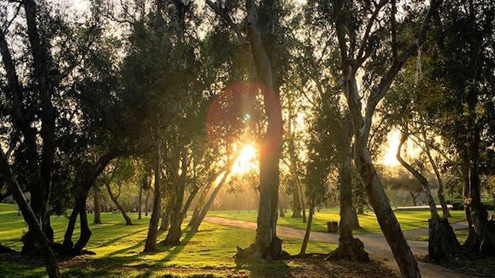 Your Perfect Day In Huntington Beach Central Park