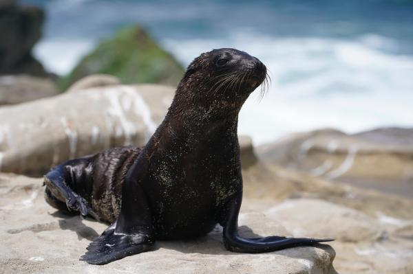 Seal Beach Seal
