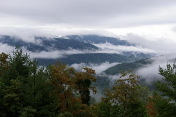 Fog floats along the treetops at Frozen Head State Park outside of Knoxville.