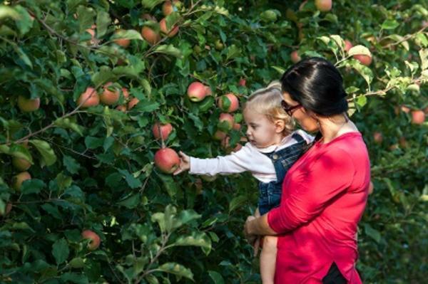 Flinchbaugh's Johnny Appleseed Day