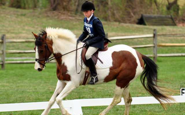 c1d74b54ed8fad Tack & Apparel Shops - Visit Loudoun - Northern VA Horse Riding Gear