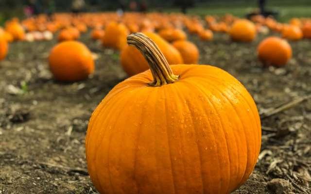 Pumpkin Patches in Etown