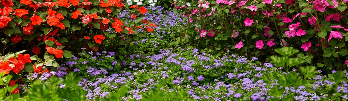 Master Gardener Guidebook To The Quilt, What Is The Usual Meaning Of Term Bedding Plant
