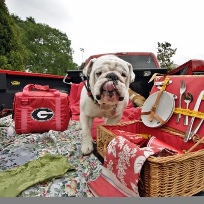 UGA Bulldogs Football Traditions