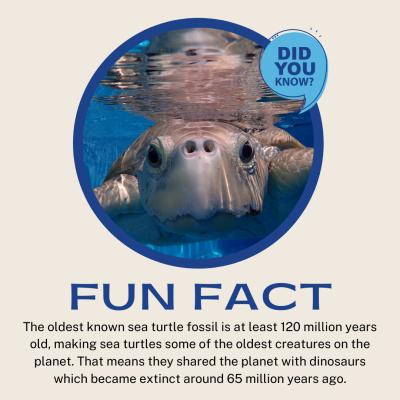 sea turtle fun fact
