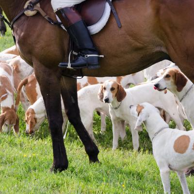 Dogs underfoot at 2016 Howard County Cup Races