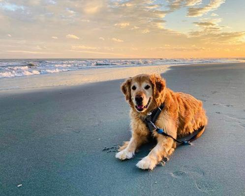 Pet-Friendly Myrtle Beach