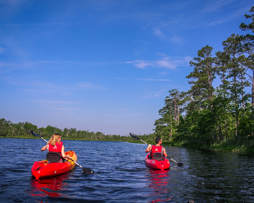 DTN - PS - Outer Banks Kayak Adventures - Alligators
