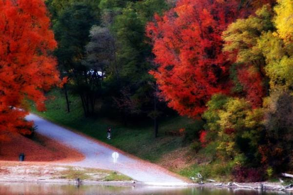 fall foliage 1 courtesy of shelly mcdaniels 0