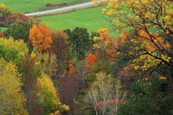 heron hill in autumn 1 by kathy wesserling fall