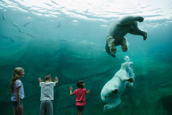 Three young children standing at the glass watching two big polar bears swin
