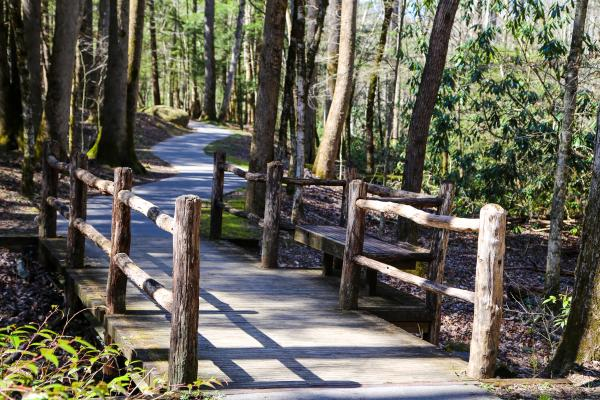 Trees line the well-paved Sugarlands Valley Nature Trail in the Great Smoky Mountains.