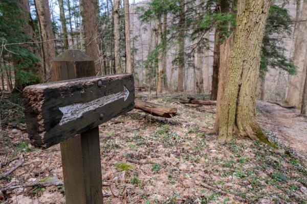 An arrow points the way along the Cove Hardwood Trail in the Smoky Mountains.