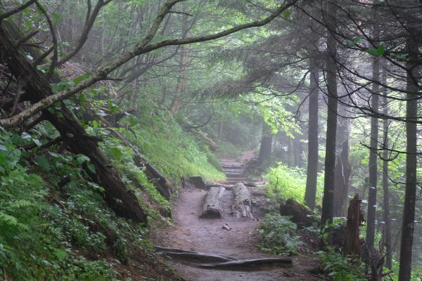Hike a trail in the Smokies