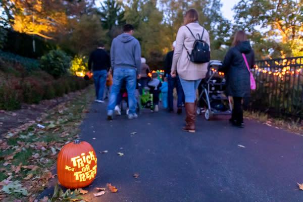 Pumpkin Glow at the Hershey Gardens Trick or Treat Pumpkin