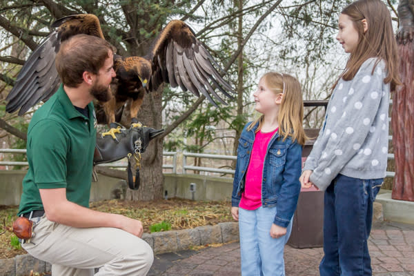 ZooAmerica Golden Eagle