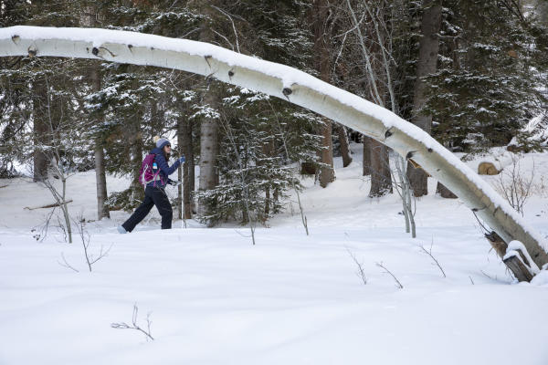 Cross-Country Skiing in the Snowy Range